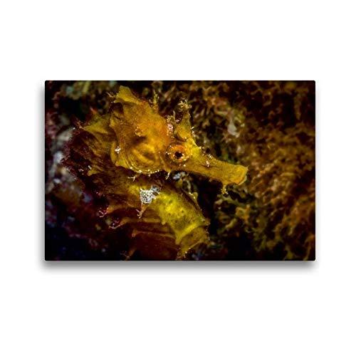 Premium Textil-Leinwand 45 x 30 cm Quer-Format Seepferdchen | Wandbild, HD-Bild auf Keilrahmen, Fertigbild auf hochwertigem Vlies, Leinwanddruck von Dieter Gödecke