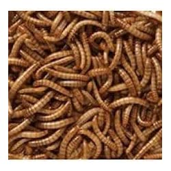 MALTBY'S STORES 2KG WILD BIRD DRIED MEALWORMS WILD BIRD FOOD