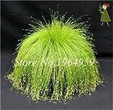 Pinkdose 100 Teile/beutel Bunte Schwingel Gras Bonsai Indoor Garten Festuca Mehrjährige Winterharte Zierpflanzen Einfach Wachsen Bonsai Sementes: 17