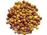 Saat für Weißklee Grasslands Huia niedrig wachsend–1Gramm–Trifolium Repens L–Weißklee–(Gründüngung)–SEM06