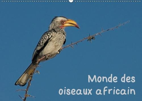 Monde des oiseaux africain (Calendrier mural 2018 DIN A2 horizontal): Des portraits d'oiseau fascinant de l'Afrique du sud (Calendrier mensuel, 14 ... Spiralbindung] [Apr 01, 2017] Wolf, Gerald