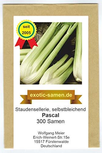 Stangensellerie - Staudensellerie - PASCAL - selbstbleichend - 300 Samen