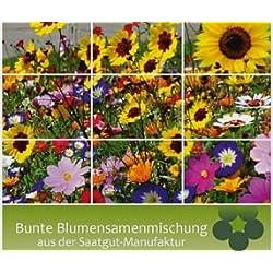 Bobby-Seeds Blumensamen Mössinger Sommer, Blumenmischung Portion