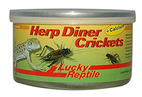 Lucky Reptile HDC-11 Herp Diner Crickets with