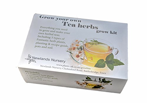 Herbal Tea Grow Your Own kit. *Includes Established Starter Plants* Everything You Need to Grow, Make and Enjoy Herbal Tea.