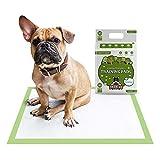 Tappetini Pogi per addestramento Cani con feromoni attraenti (Pacchetto di 20) - Ecocompatibili, Grandi, Super-assorbenti