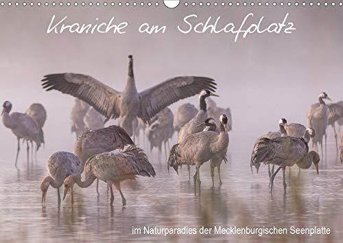 Kraniche am Schlafplatz - im Naturparadies der Mecklenburgischen Seenplatte (Wandkalender 2020 DIN A3 quer)