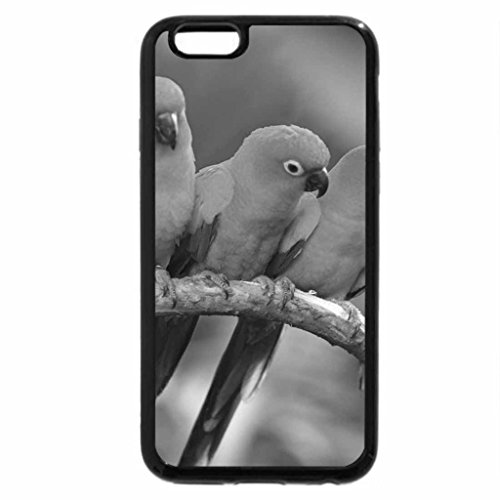 iPhone 6S Plus Case, iPhone 6 Plus Case (Black & White) - Sun Conure Parrots (Conure Sun Parrot)