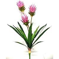 Plante exotique trois branches Fleurs Bordeaux - Hauteur 90 cm