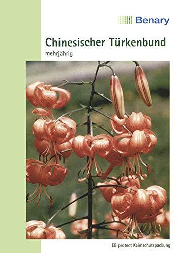 Benary - Chin. Türkenbund - Lilium willmottiae