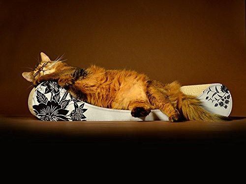 Cat-on / Le Divan mit Blumenmuster.