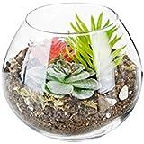 Aakriti Glass Plant Terrariums - Glass Vase Plants/Tea Light Candle Holders Succulents Moss Miniature Garden Planters Home Decor Indoor Garden (2)