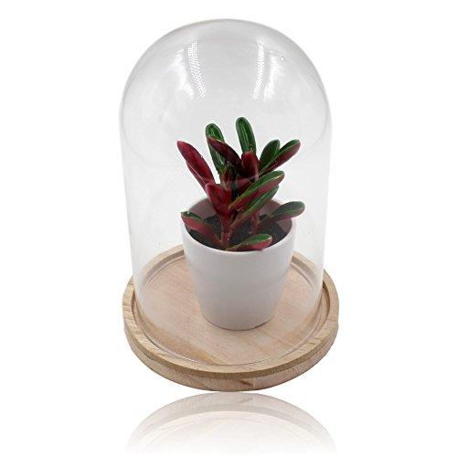 Artificial Plant Within Glass Dome (Glas-dome-vitrine)