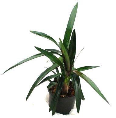 Mühlan Orchideen 1994