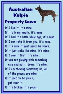 Magnetsandhangers Australian Kelpie – Novelty Dog Fridge Magnets – Property Laws