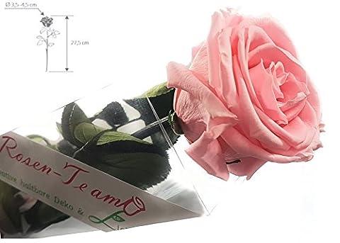 Rosen-te-amo Rose konserviert (Blume) mit Grußkarte– ECHTE Blume 3 JAHRE haltbare Rose OHNE WASSER für den Blumenstrauß