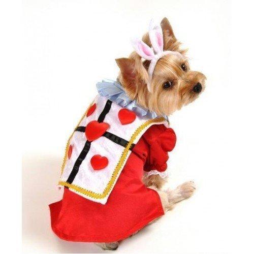 Junge Haustier Hund Weißen Kaninchen Alice im Wunderland Halloween Weihnachtsgeschenk Kostüm Kleid Outfit - translation, original, Weiß, XS