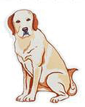 Yellow Lab Magnetic Screen Door Saver - By Ganz by Ganz