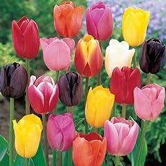 Idea Regalo - 50 Bulbi di tulipani
