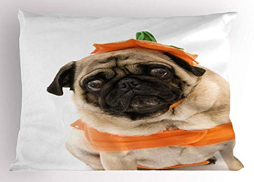 Ytavv Pumpkin Pillow Sham, Pug with a Pumpkin Costume for Halloween Trick or Treat Cute Animals Photo, Decorative Standard Queen Size Printed Pillowcase, 30 X 20 inches, Ivory Orange Black