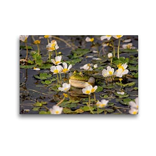 Premium Textil-Leinwand 45 x 30 cm Quer-Format Wasserhanenfuss | Wandbild, HD-Bild auf Keilrahmen, Fertigbild auf hochwertigem Vlies, Leinwanddruck von Winfried Erlwein