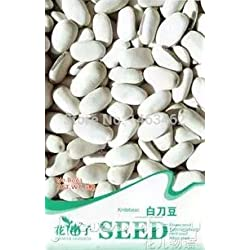 Generic 3 unids white Bean, Healthy Family Bean Vegetable Seeds