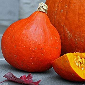 Pinkdose® Red Kuri Squash Seeds- Open-Pollinated, Japanese kabocha Pumpkin, Organic Non-GMO