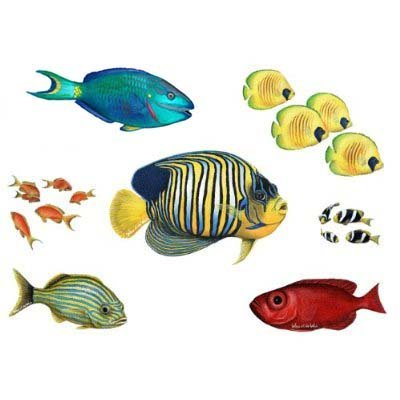 walls-of-the-wild-combo-fish-pack-overstock-by-walls-of-the-wild