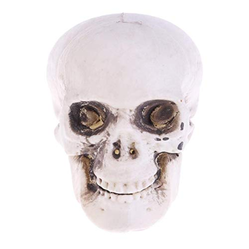 ERQINGZS Halloween-Dekoration Halloween Dekoration Künstliche Menschlichen Schädel Kopf Modell Horror Prop Kunststoff Schädel Kopf DIY Partydekorationen Kaffee Bars Ornament