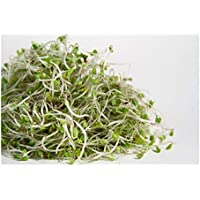 ORGANIC SPROUTING SEEDS - BROCCOLI - 400GM