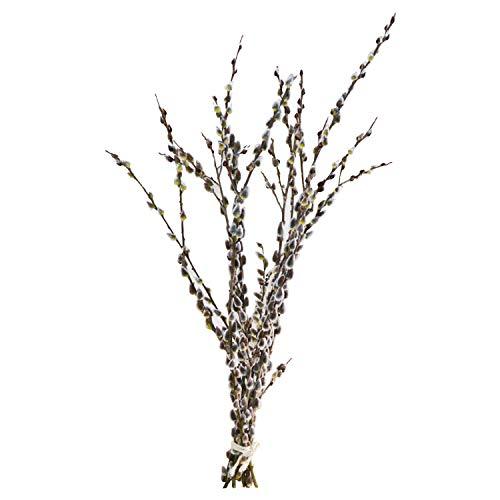 10 Palmkätzchenzweige/Weidenkätzchenzweige (Oster-Zweige, 80cm) : Deko-Äste Salweide | Deko Bodenvase | Deko mit Ästen | Osterdeko