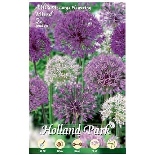 Holland Park bulbi da fiore di molte varietà e colori in sacchetto blister con foto (ALLIUM A FIORE GRANDE MIX 5 bulbi)