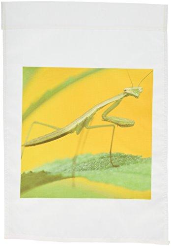 3drose-fl-94224-1-praying-mantis-insetto-pennsylvania-stati-uniti-us39-rkl0020-raymond-klass-giardin