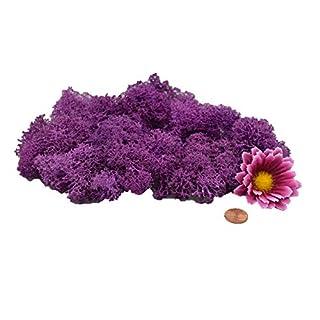 Muwse Island-moos F 25g Viola Lila gerupft vor-gereinig weich haltbar. Deko-moos Floristik-moos Bastel-moos