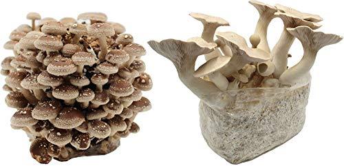 Bio Pilzzucht-Pärchen, 2 Compact Fertigkulturen zum Sparpreis: Kräuterseitling + Shiitake