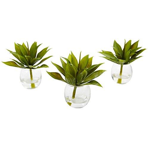 Fast natur 6888-s314,6cm Mini Agave Sukkulente Trio in Glas Vasen (Set von 3)