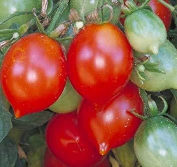 TOMHY Samen-Paket: Keim Seeds PLATFIRM-30 Samen von Riesentraube - Tomaten Fruited