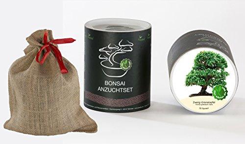 Seedeo Bonsai Geschenk – Set Zwerg-Granatapfel (Punica granatum Nana)