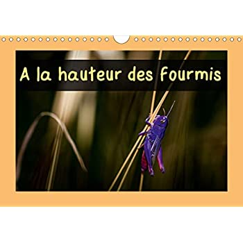 A la hauteur des fourmis 2020: Calendrier mensuel, 14 pages avec des macrophotographies d'insectes des Pyrenees Orientales