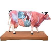 66fit Rind-Akupunkturmodell – Druckpunkte bei Tieren für Tierärzte
