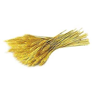 CTlite – Hojas de trigo secas doradas, hojas de trigo secas huecas doradas para decoración de bodas, fiestas, decoración…