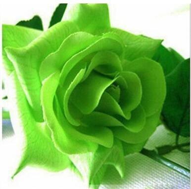 jardinières Pots de fleurs, 20 sortes de 100 graines, Rainbow Rose graines belle rose graines bonsaïs graines pour la maison et le jardin 15
