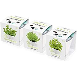Domestico Trio Kit des Herbes aromatiques prêt-à-pousser - Menthe, Origan, Basilic, Herbs growing kit, All-In-One set - pot de fleur auto-irrigant 13x13 cm, graines, substrat frais