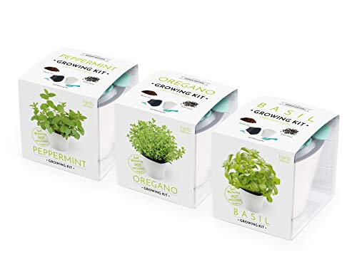 domestico set di 3 erbe per la coltivazione - menta, origano, basilico, herbs growing kit, all-in-one set - vaso autoinnaffianti 10x10 cm, i semi, il substrato fresco pieno di nutrienti