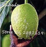 FERRY Semillas de Alto Crecimiento Solo no Las Plantas: Semillas Cushy-10 Semillas/Bolsa importada Baobab (Onia digitata) Seed s Outerdoor Semillas Bonsai Semillas orgánicas Crecen rápido 2