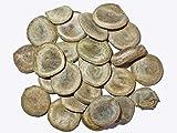 Gewöhnliche Brechnuss -Strychnos nux-vomica- 20 Samen