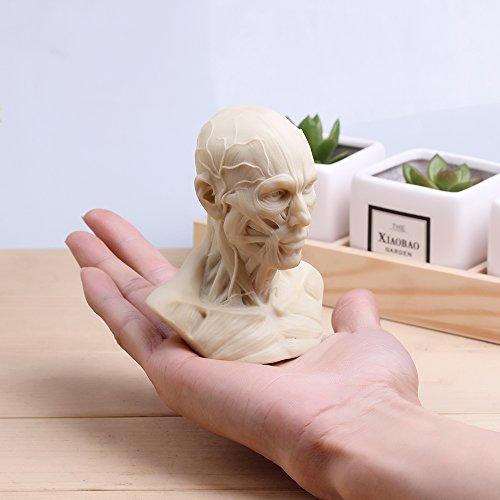 Echthaar Modell Anatomie Skull Head Muscle Knochen Medical Kunst für die Schule (Kunst Schule Halloween Kostüme)