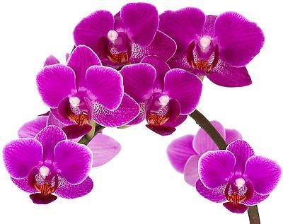 stickersnews-stickers-fleur-orchidee-ref-1951-29x22cm