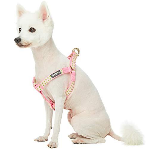Blueberry Pet Valentins-Tupfen-Beflockung Samtiges Step-in-Hundegeschirr in Baby-Pink, Brustumfang...