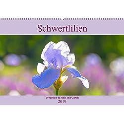 Schwertlilien - Eyecatcher in Parks und Gärten (Wandkalender 2019 DIN A2 quer): In vielen Gärten sind Schwertlilien im Frühling aufgrund ihrer ... (Monatskalender, 14 Seiten ) (CALVENDO Natur)